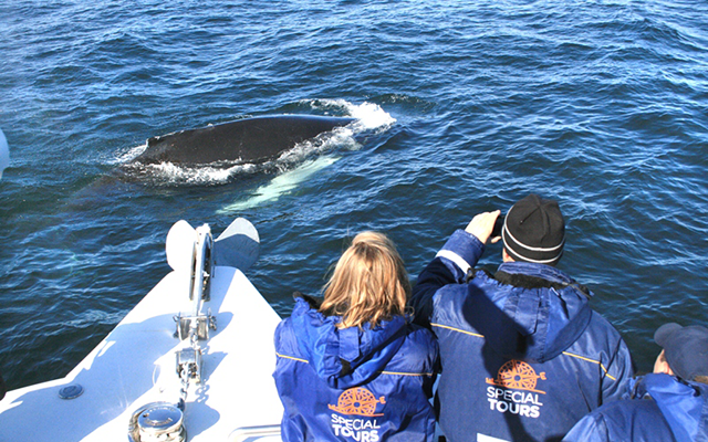 special-tours_whale1